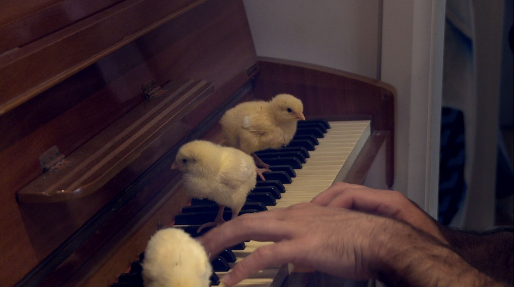 ANIMAL CONDITION 1 - CHICKS ON PIANO_sm